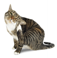 how to stop cat fleas biting me