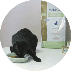Cat eating wet food from a bowl in front of bag of oral care dry food
