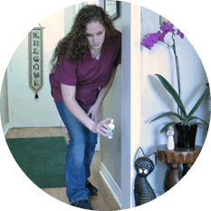 The Cat Clinic staff member spraying Feliway pheromone therapy in the clinic