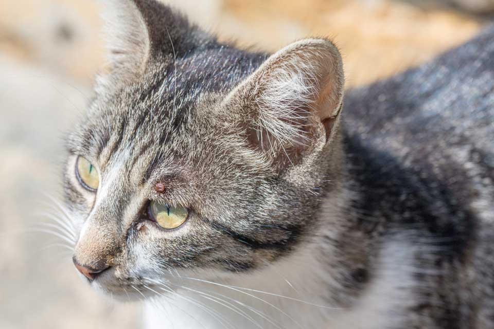 Cats for Adoption | The Cat Clinic