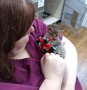 Cats for Adoption | Village Cat Clinic